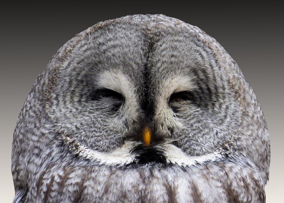 Animal, Owl, Eagle Owl, Wisdom, Plumage, Bird