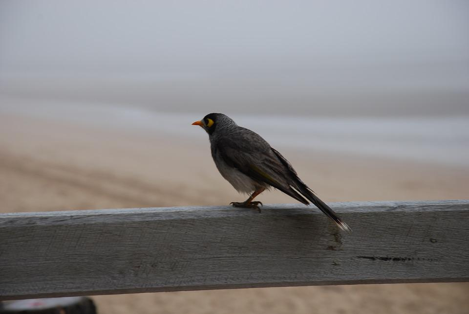 Fog, Beach, Bird, Animal, Weather, Wood, Feathers
