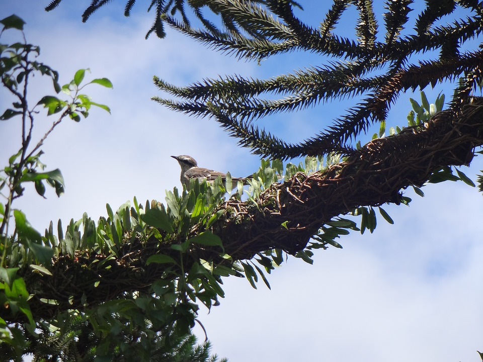Bird, Branch, Plant, Forest, Nature, Sol, Wood, Sky