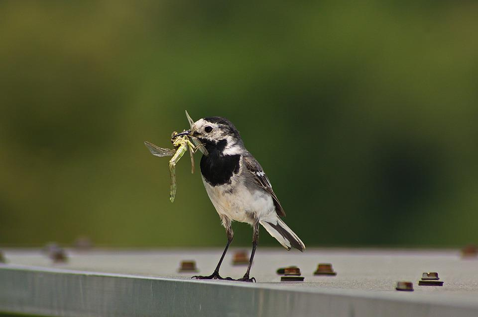 Bird, Nature, Worm