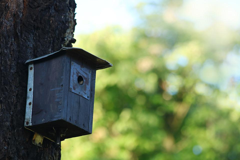 Birdhouse, The Feeder, Shed, Tree
