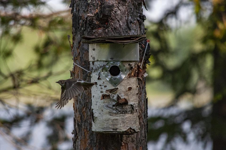 Flycatcher, Birdhouse, Tree