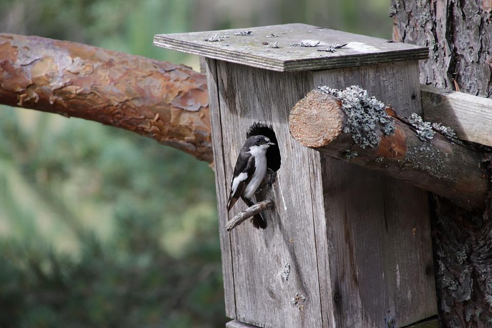 Flycatcher, Bird, Birdhouse, Tree, Cam, Forest, Summer