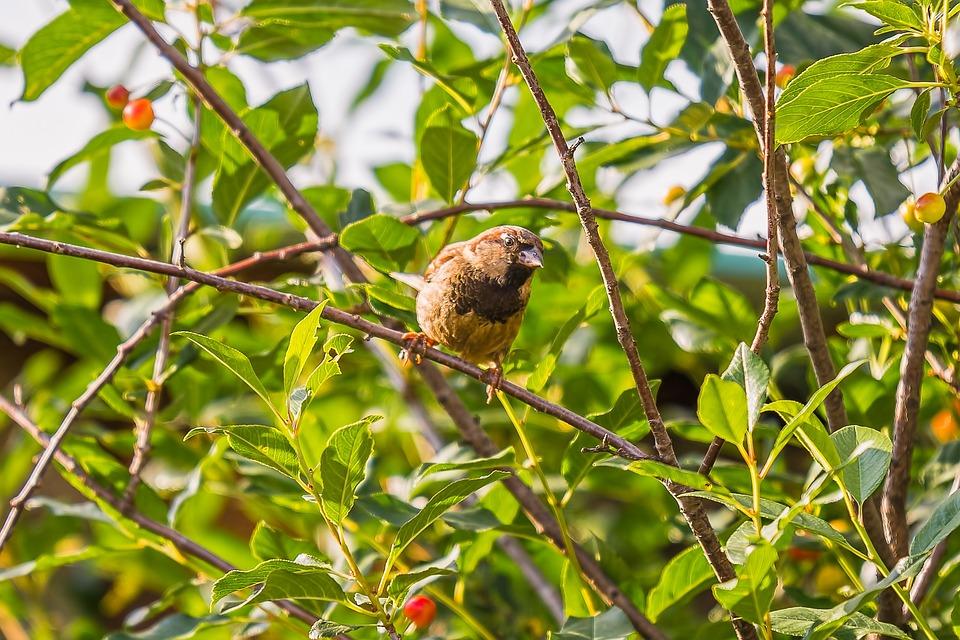 Sparrow, Birds, Plumage, Animals, Nature, Birdie, Pen