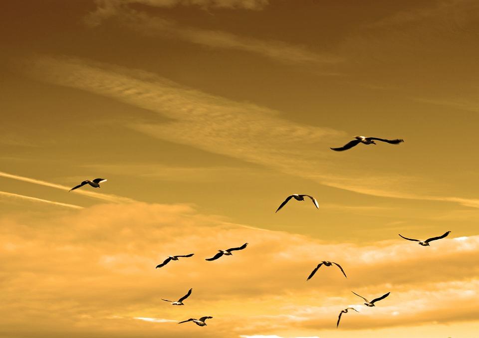 Birds, Flock, Air, Animals, Feather, Flight, Fly