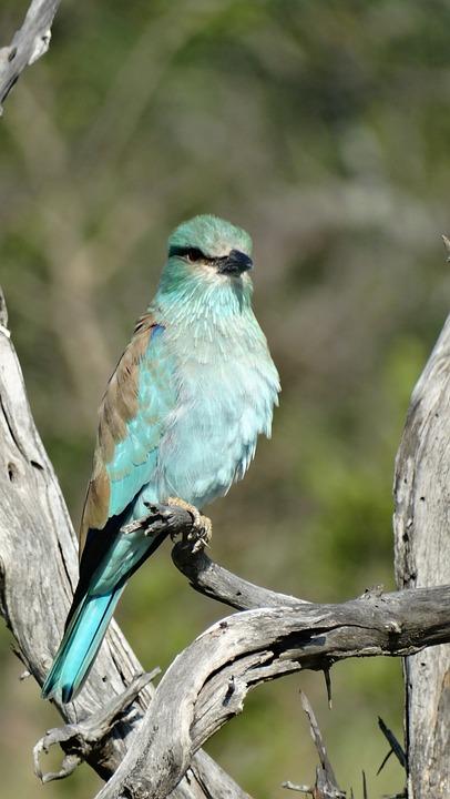 Birds, Wildlife, Nature, Animal Kingdom