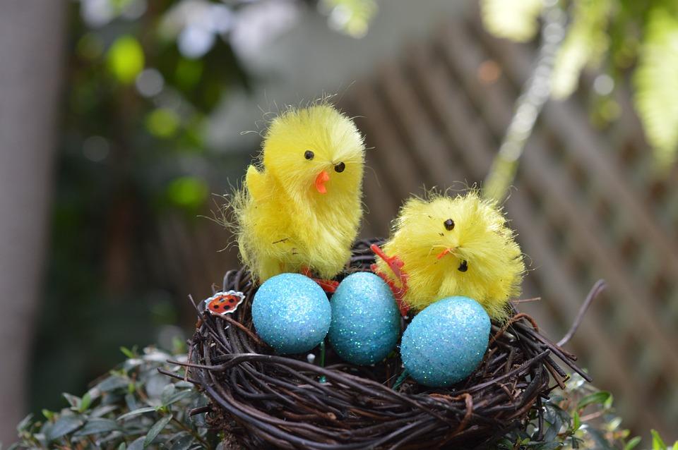 Chicks, Birds, Eggs, Nest, Easter, Bird Nest, Animals