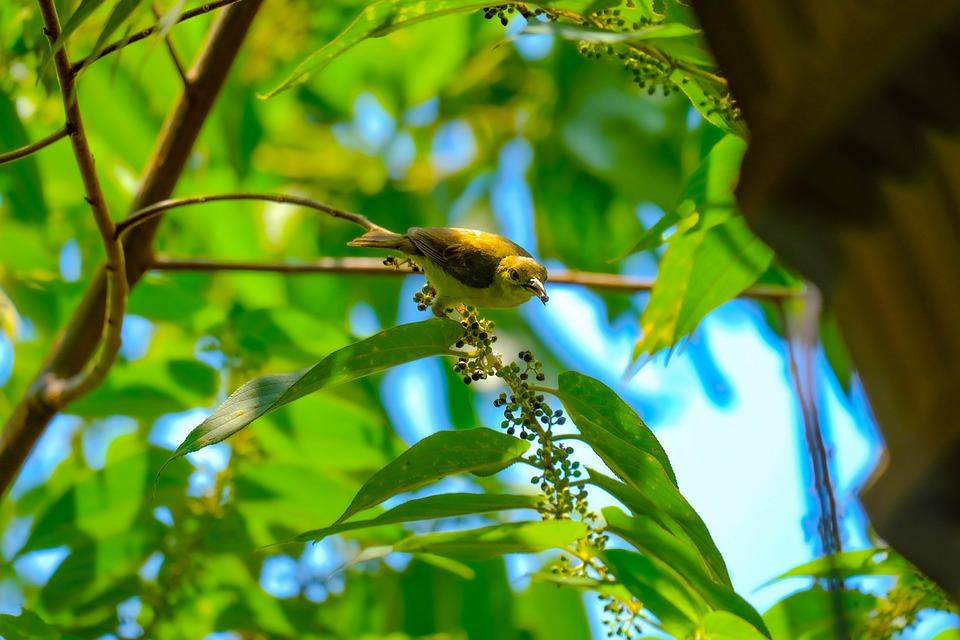 Birds, Animals, Fujil Photo