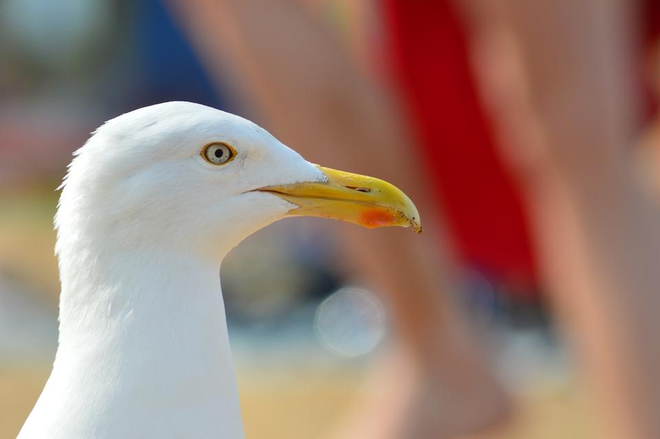 Seagull, Birds, Beach