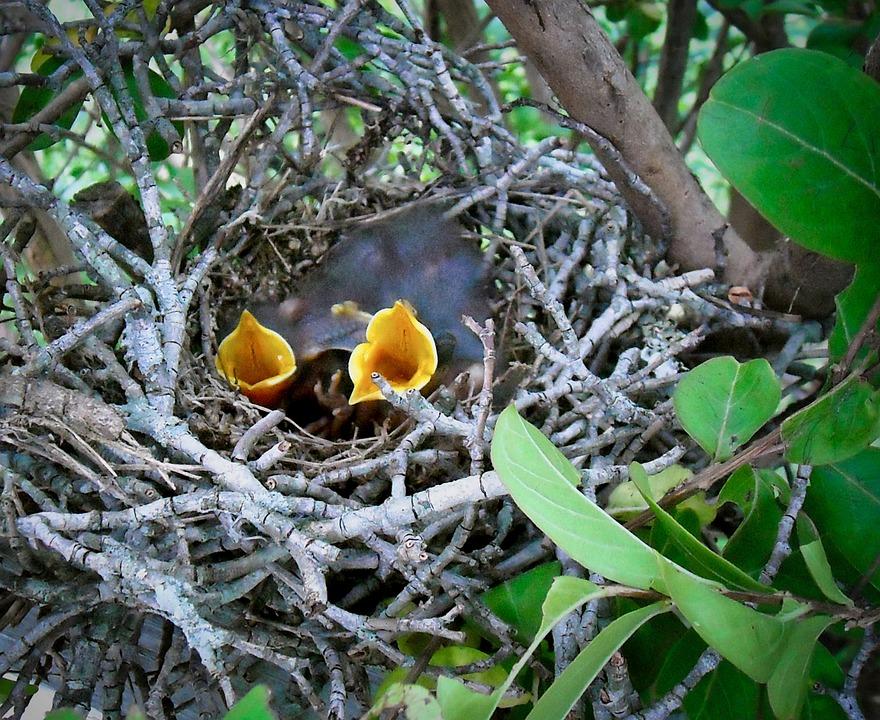 Birds, Chicks, Nature