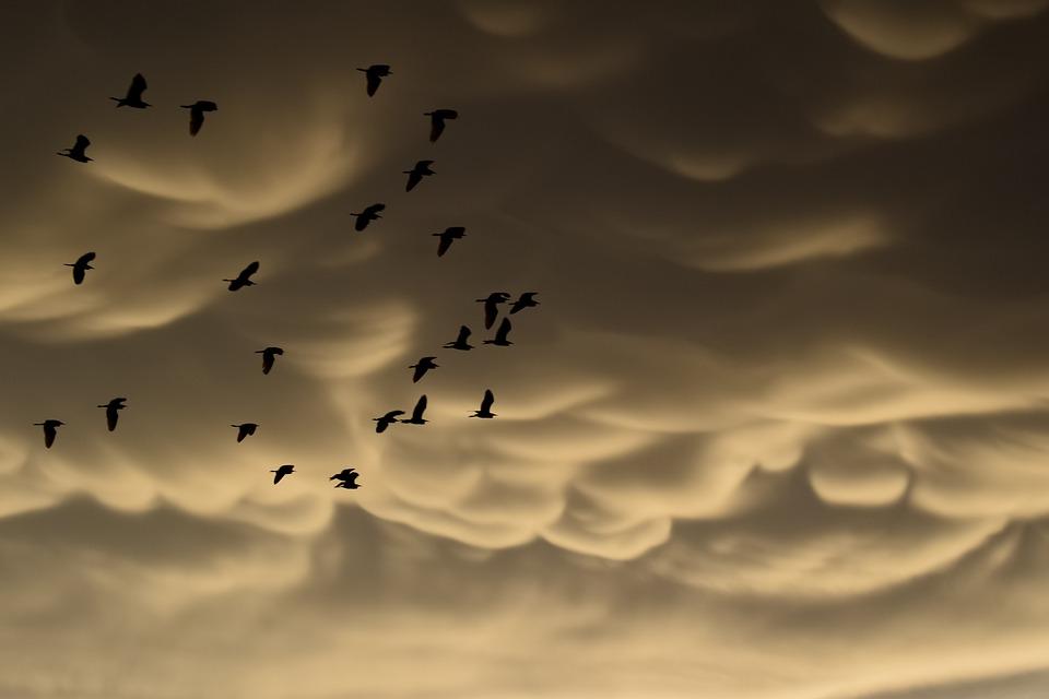 Mammatus Clouds, Birds, Migratory, Clouds, Strange