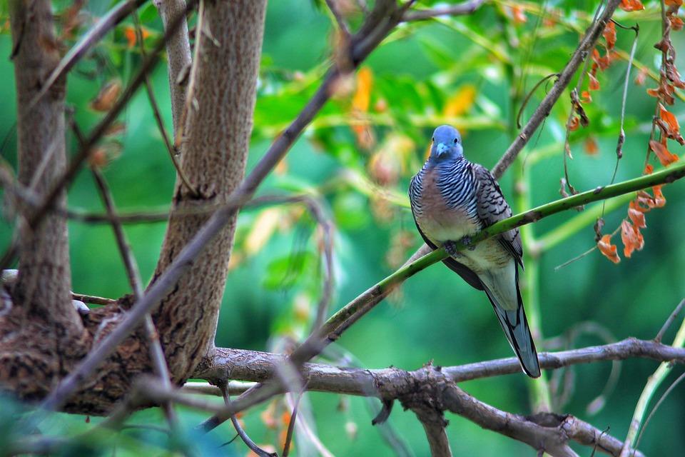 Nature, Birds, Animals, Dove