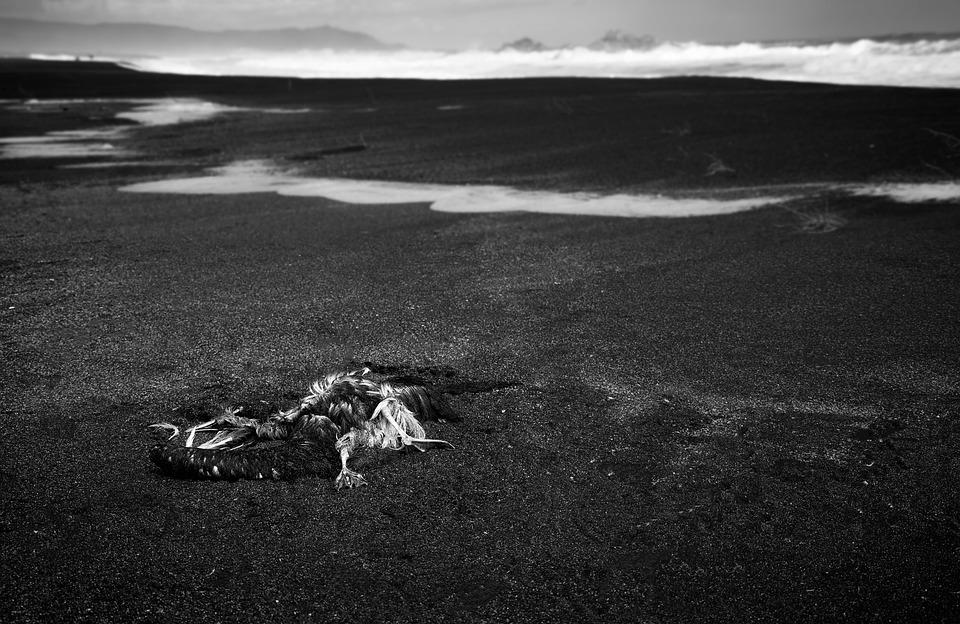 Death, Bird, Birds, Fly, Sea, Black And White