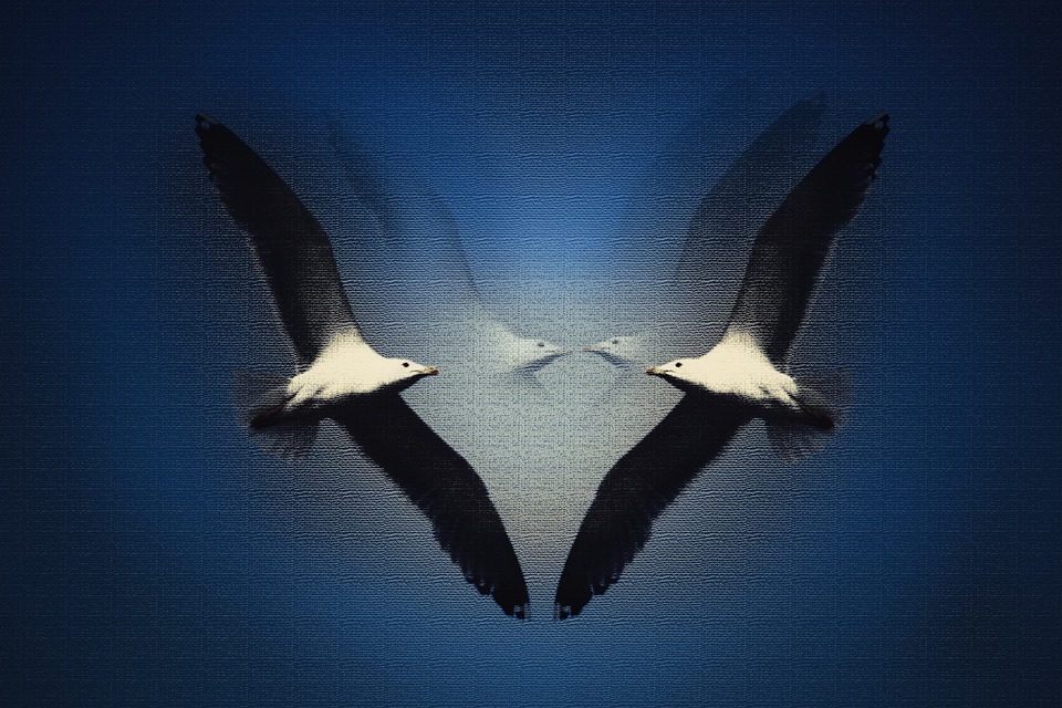 Seagulls, Birds, Animals, Wings, Flight, Fly, Freedom