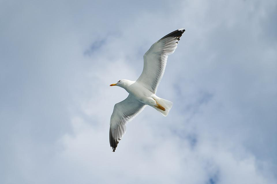 Seagull, Bird, Birds, Animal, Nature, Gulls, Day