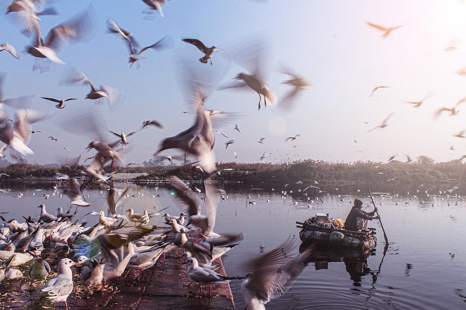 Birds, River, Boat, Man, Water, Lake, Nature, Sunrise