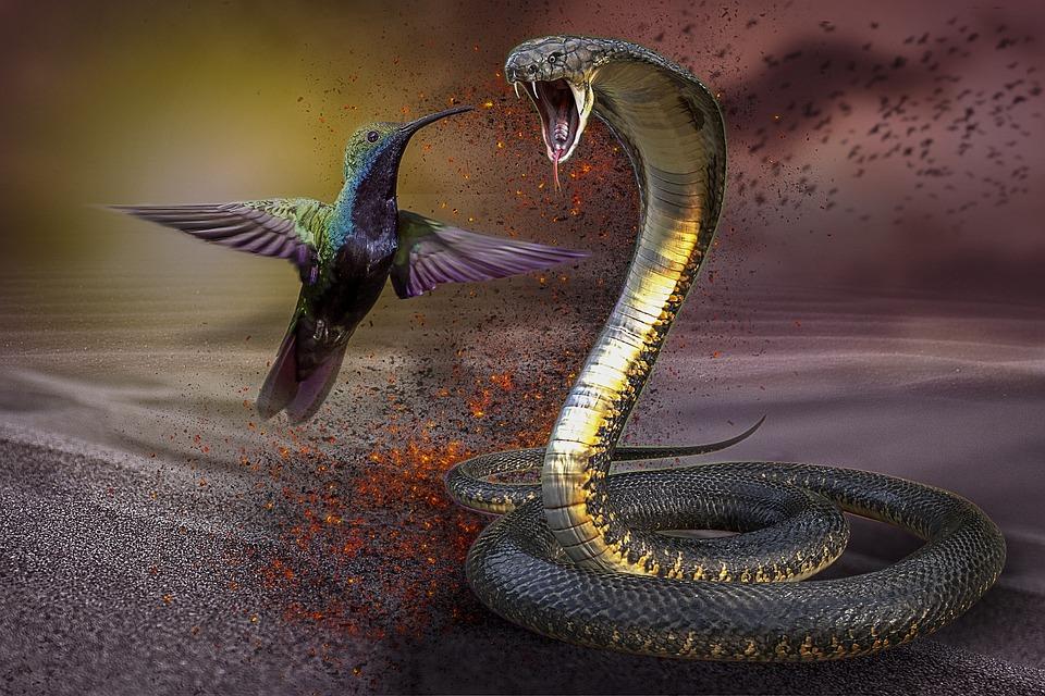 Manipulation, Hummingbird, Cobra, Snake, Desert, Birds