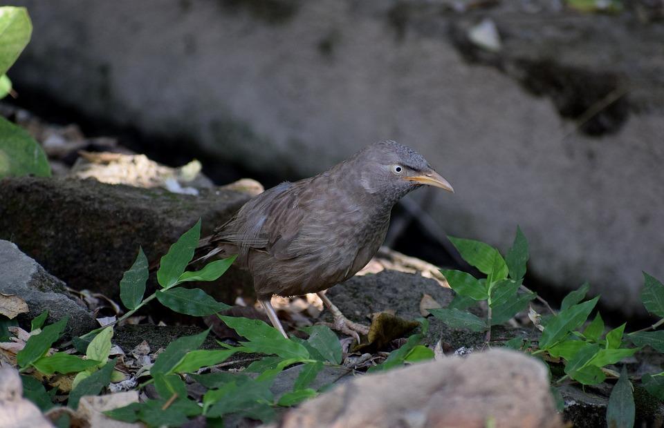 Birds, Nature, Natural, Animal, Plumage, Bill, Colorful