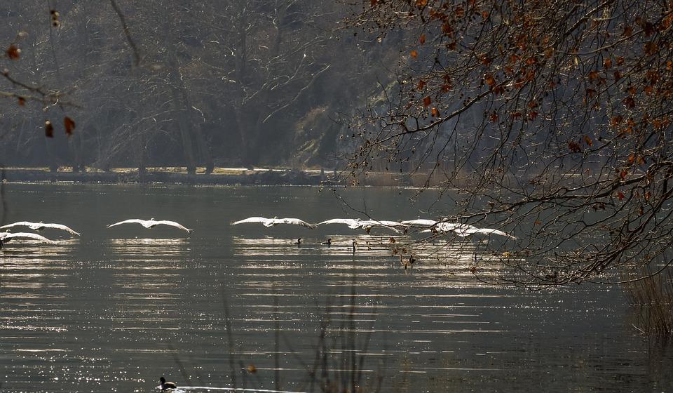 Pelicans, Birds, Nature, Landscape, Kastoria, Greece