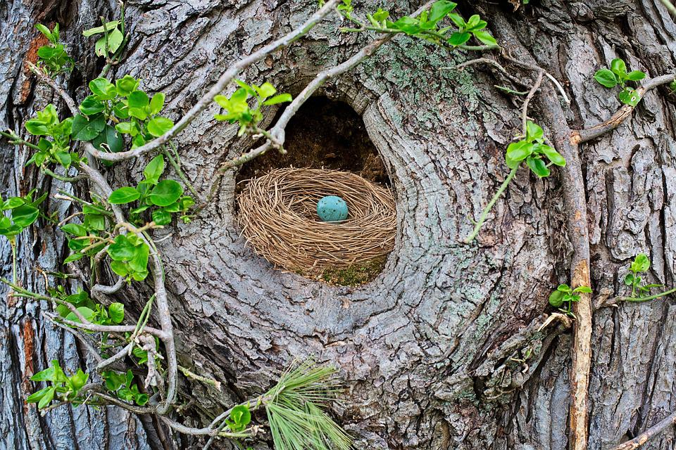 Bird's Nest, Robin's Nest, Robin Egg, Bird Egg, Spring