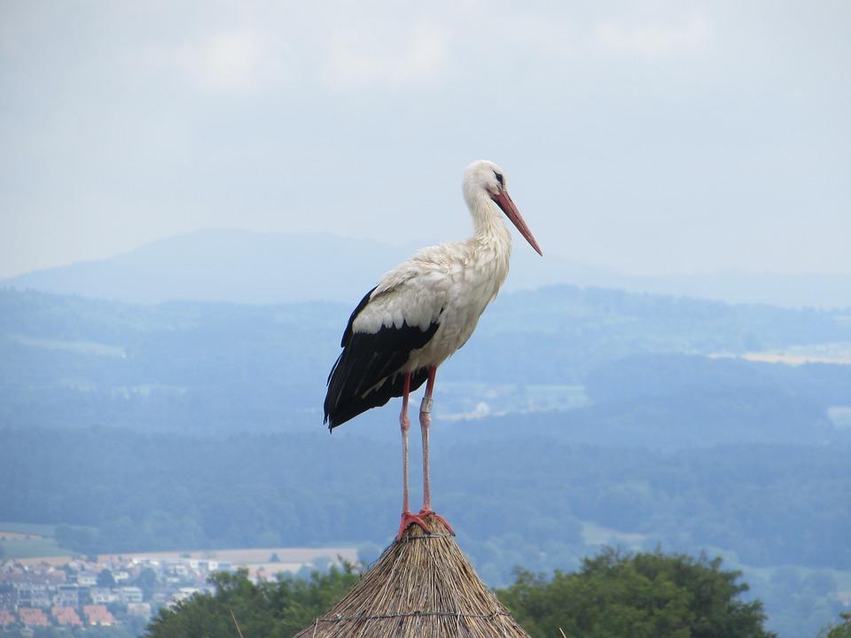 Natural, Sky, Birds, Wildlife, Stork, Outdoor, Travel