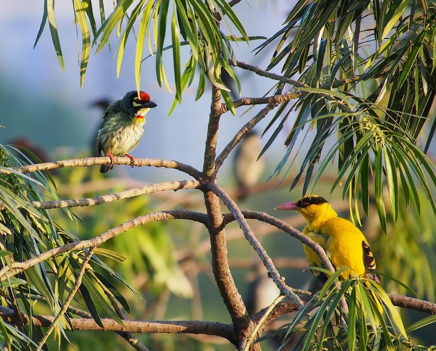 Birds Perched, Wild, Bird, Wildlife, Outdoor, Natural