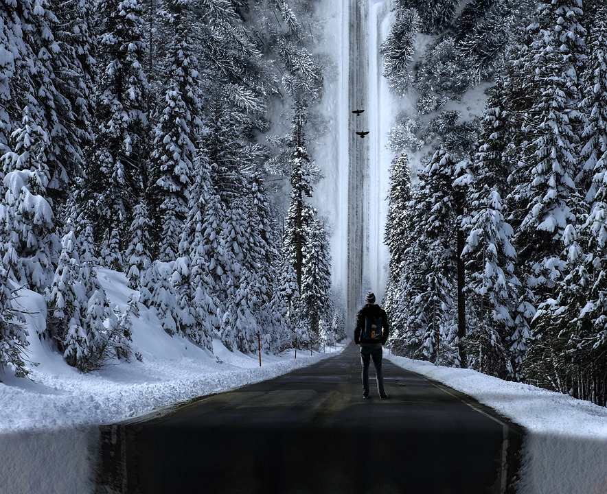 Forest, Roads, Snow, Surreal, Inception, Dream, Birds