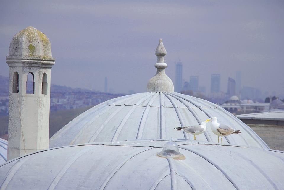 Lover, Birds, Turkey, Travel, Romantic, Animal