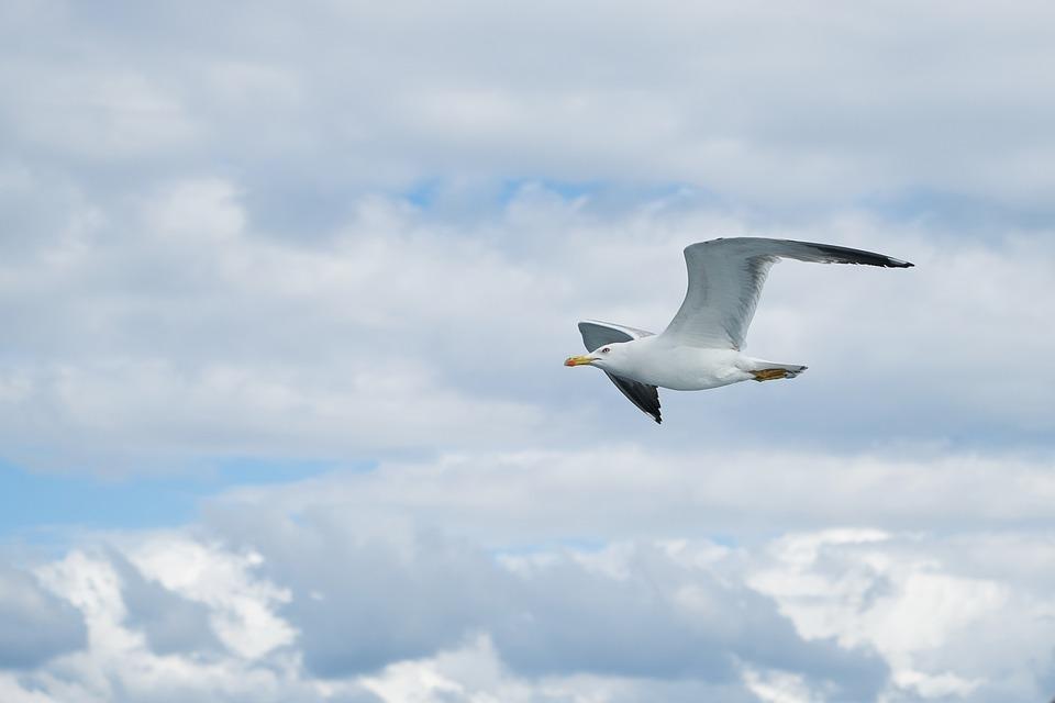 Seagull, Bird, Birds, Animal, Nature, Gulls, Day