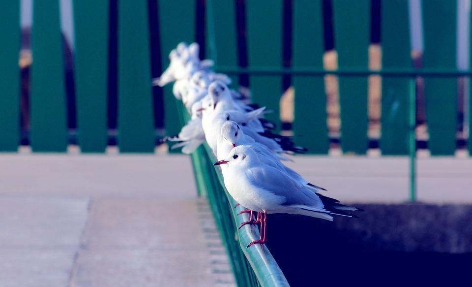 Seagulls, Birds, Animal, Sea, Spain