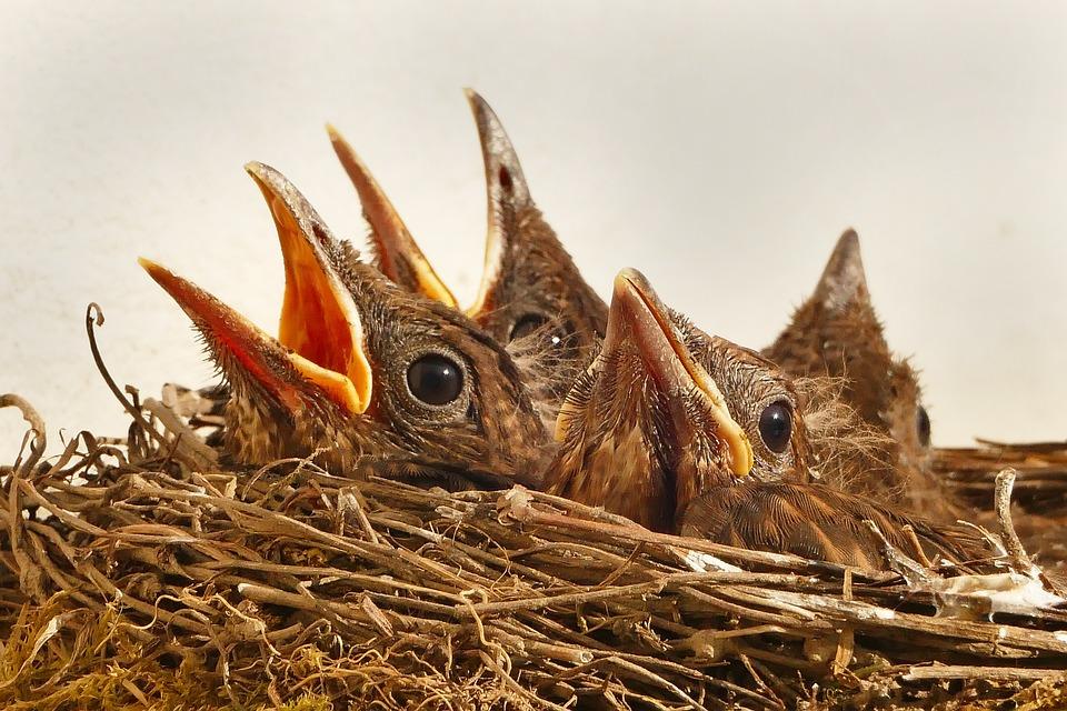 Bird, Birds, Animal, Bill, Songbird, Sitting, Blackbird