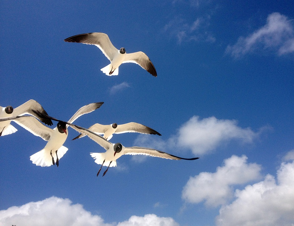 Seagulls, Freedom, Flying, Birds, Nature, Blue, Sky