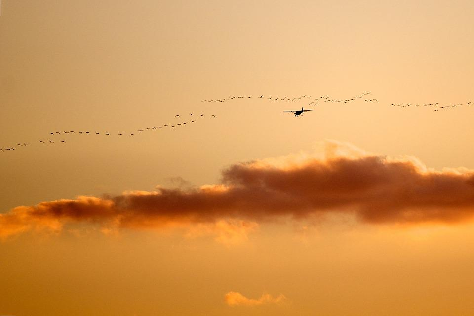 Birds, Airplane, Sunset, Nature, Landscape, Sky, Plane