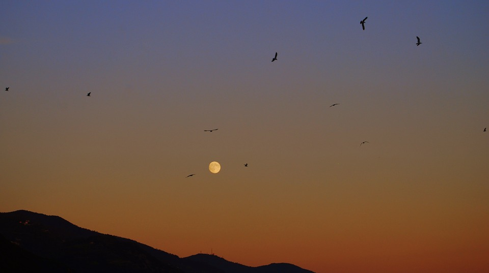 Sunset, Luna, Birds, Sky, Mountains, Nature
