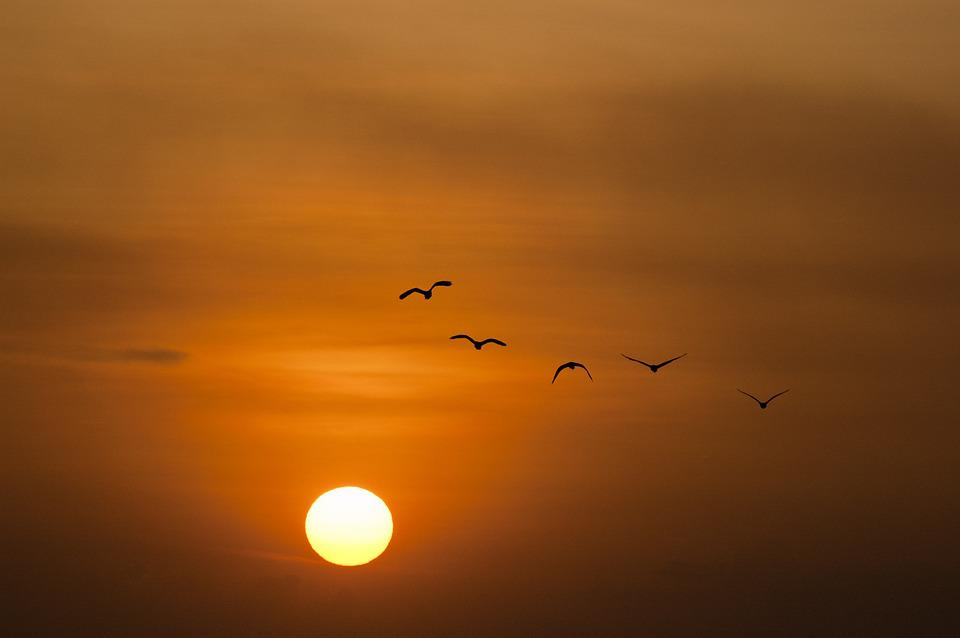 Sunset, Sea, Sun, Birds, Twilight