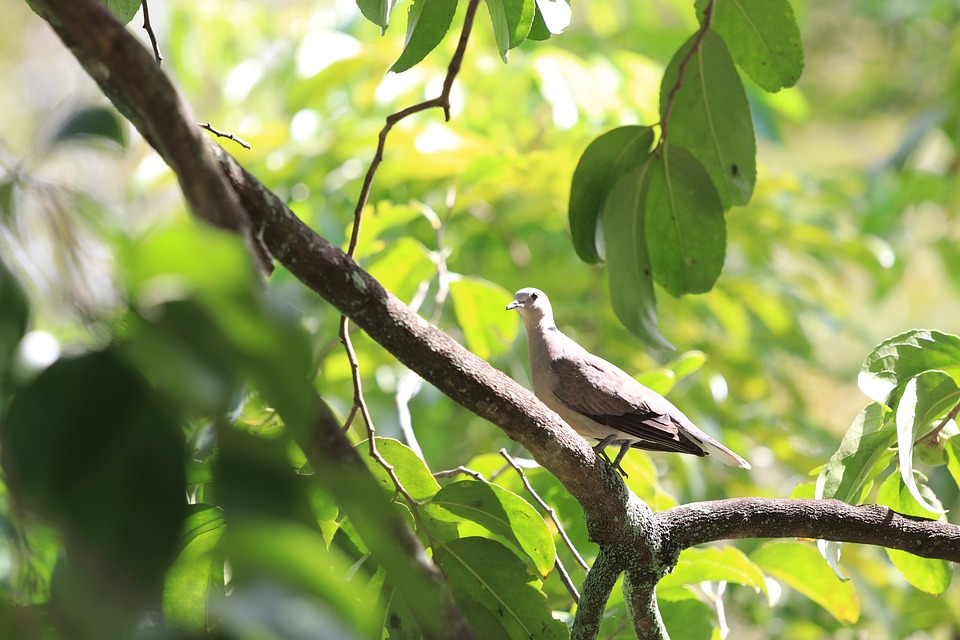Bird, Peace, Tree, Birds