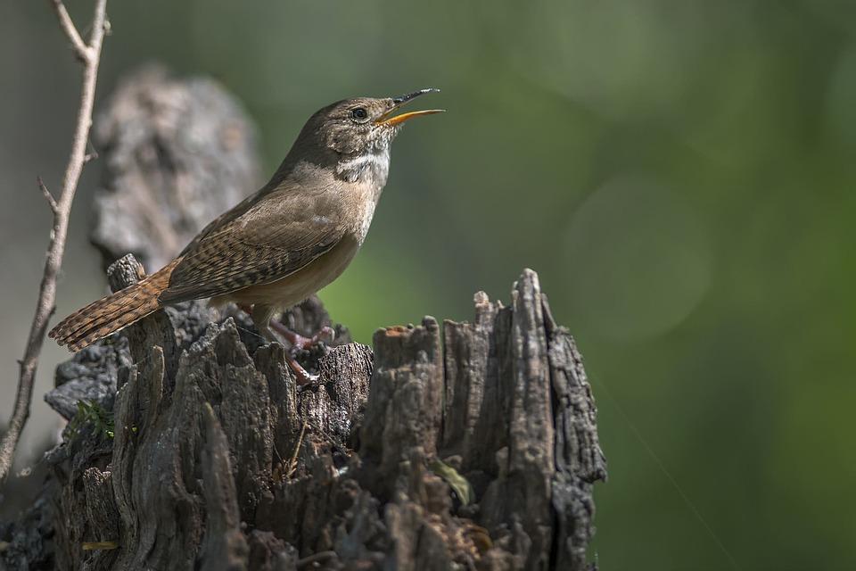 Birds, Wildlife, Nature, Animalia