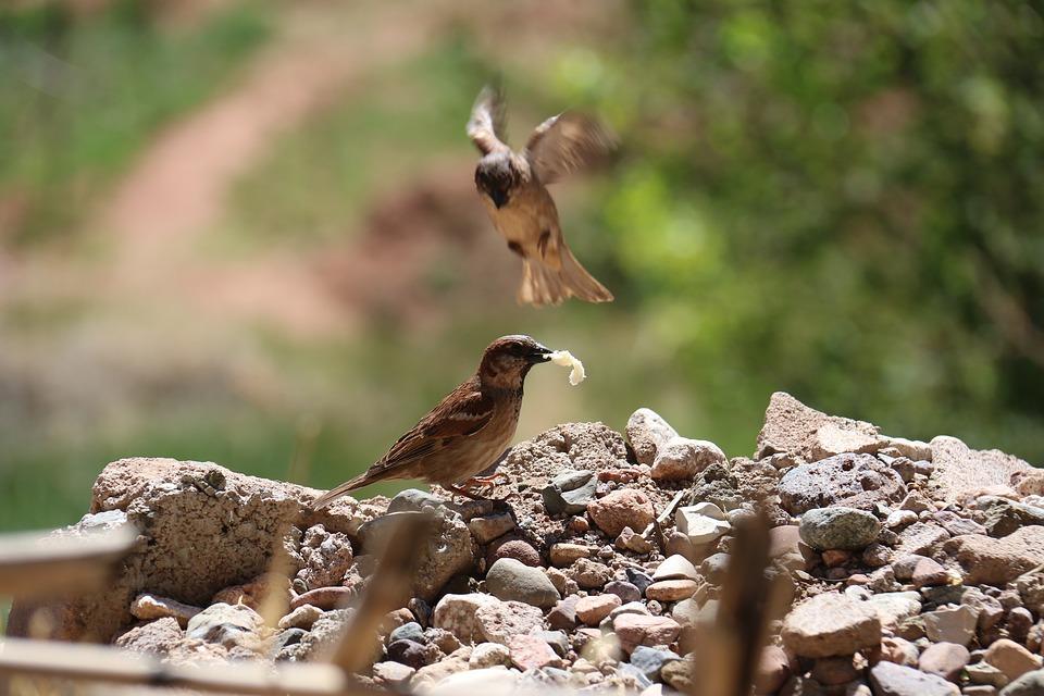 Nature, Wildlife, Animalia, Outdoors, Birds, Eat, Share