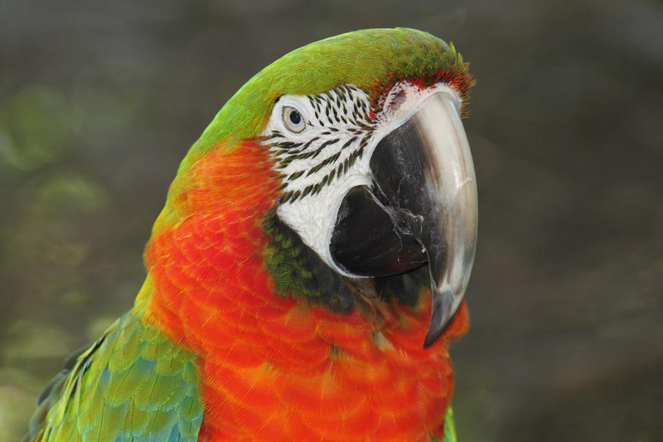 Birds, Nature, Pet, Wildlife, Animal, Birdwatching