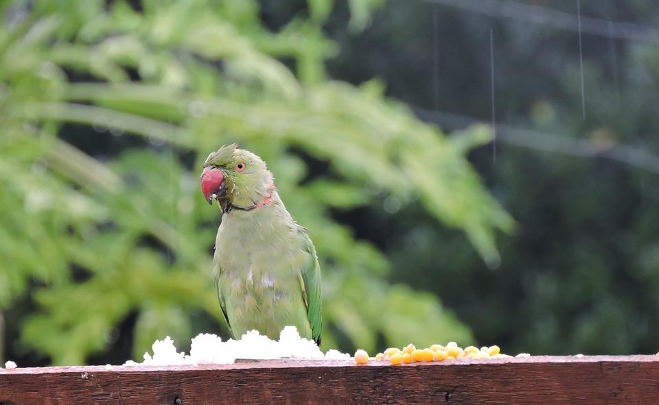 Nature, Bird, Birdwatching