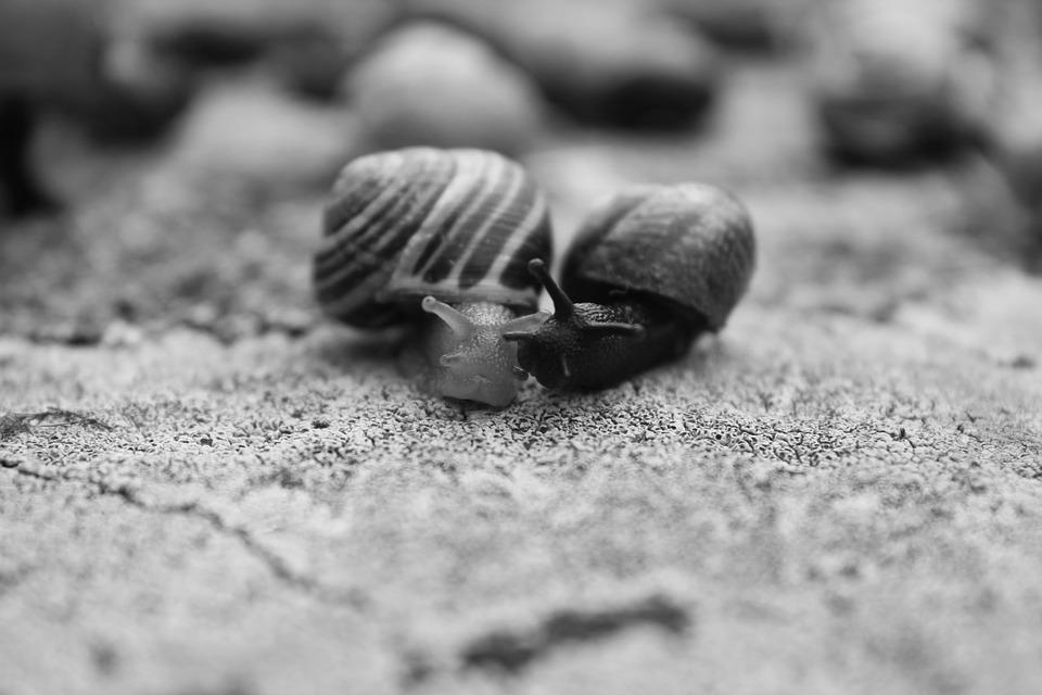 Snails, Black, White, Black And White, Nature, Kiss