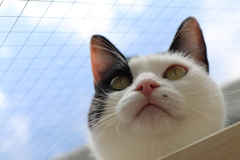 Black And White Cat, Cat, Blue Sky, The Face Of The Cat