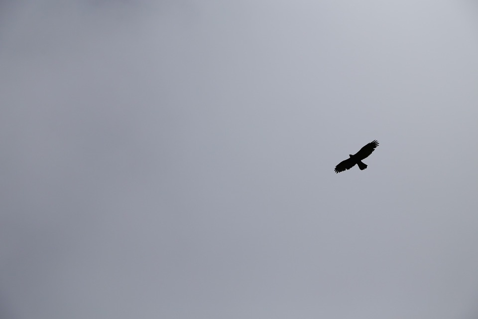 Sky, Eagle, Black And White, Wings, Flight