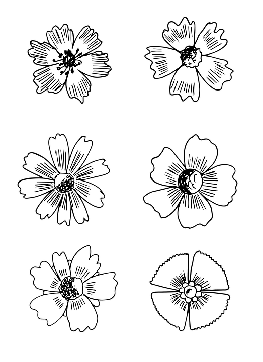 Flower, Blossom, Bloom, Drawing, Black And White
