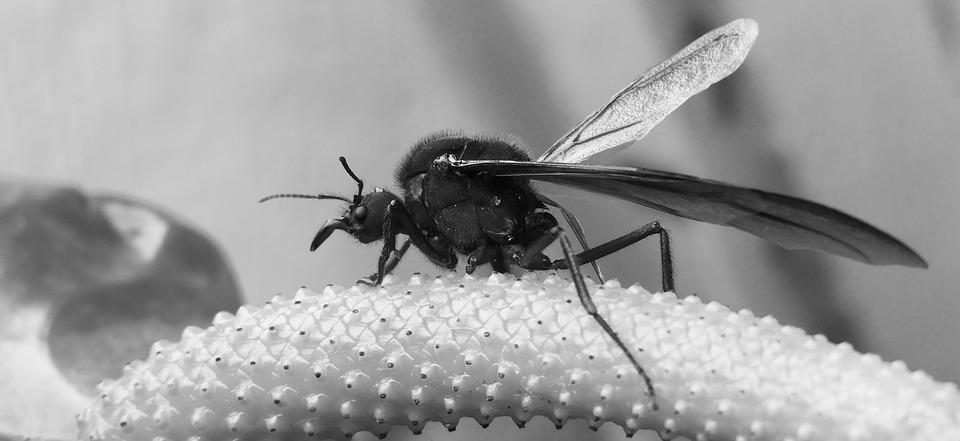 Black And White, Insect, Garden, Colombia