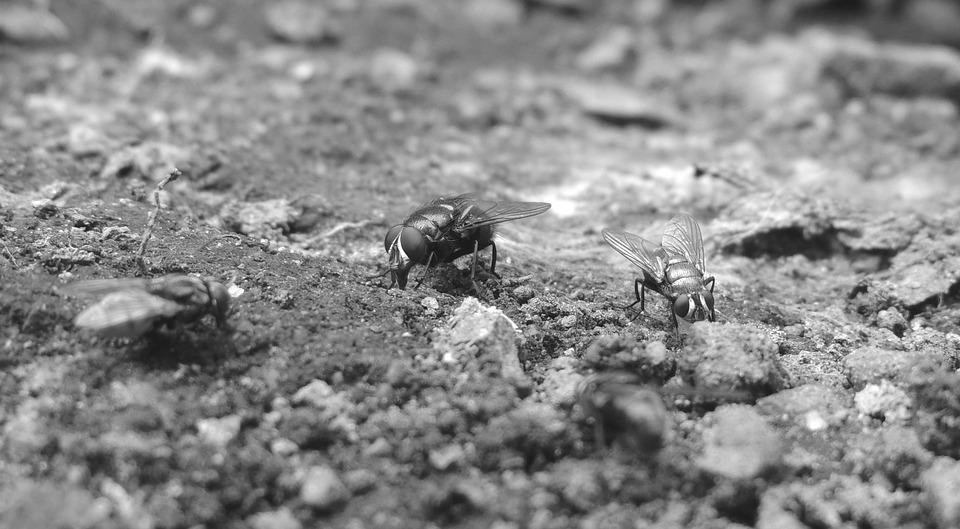 Nature, Black And White, Insect, Fly