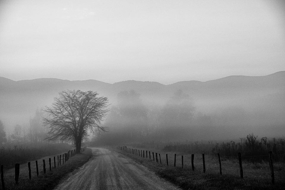 Tree, Road, Landscape, Black And White, Fog, Scenery