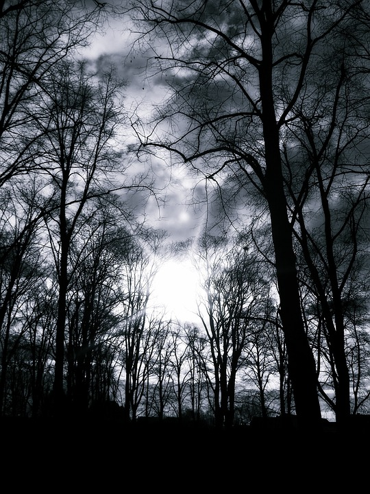 Trees, Silhouette, Black And White, Sun, Light, Nature