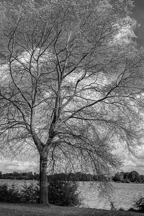 Tree, Black And White, Colorless, Nature, Inspiration
