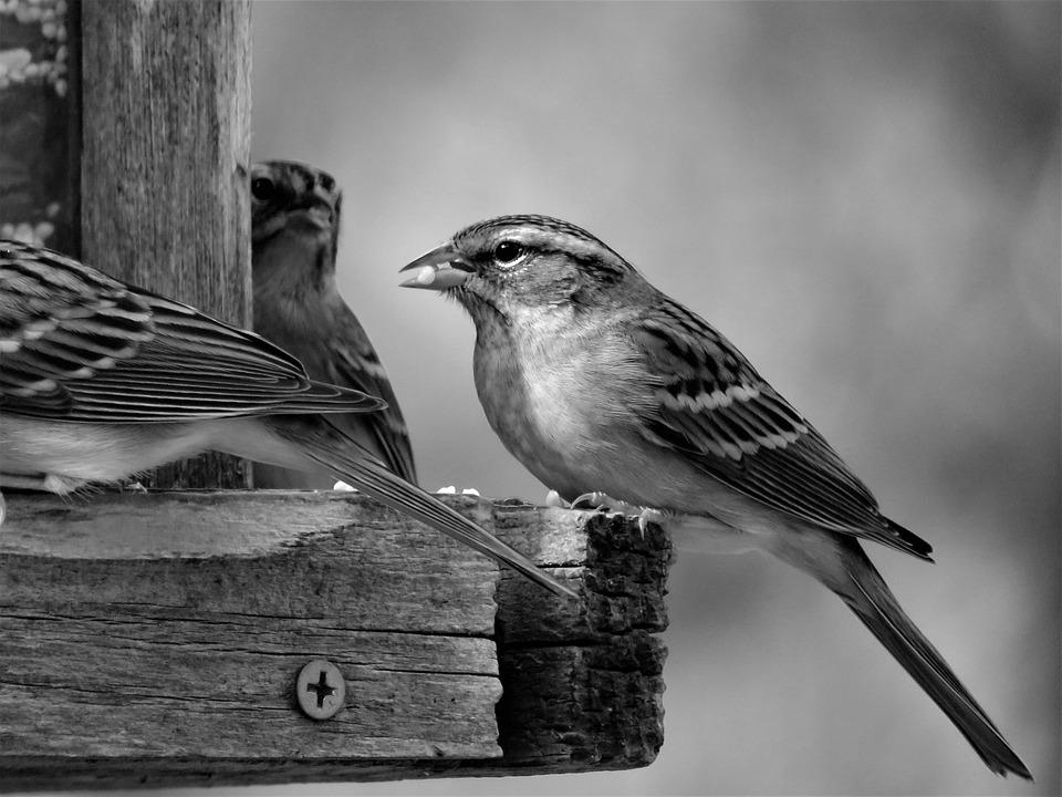 Bird, Black And White, Wildlife